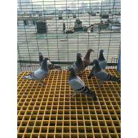 玻璃钢格栅@大竹养殖地网格栅价格@养殖玻璃钢格栅厂家