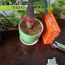 豌豆多用型绑枝机 便捷省力绑蔓器