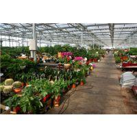 陕西休闲种植采摘园大棚温室20000平、集生产旅游观光于一身