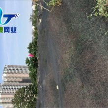 垃圾覆盖绿网 黑色遮阳网 厂家直销优质盖土网
