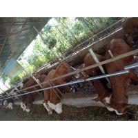 广西国家重点扶贫产业协会上林政府专项扶贫认养山水牛