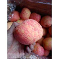 山东红富士苹果入库价格