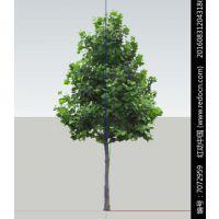 法桐树生长迅速,易于繁殖,树形好,遮阳面积大,抗烟尘,是典型的行道树种。