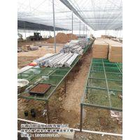农业温室大棚报价|农业温室大棚|芷阳温室