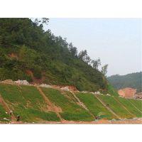 边坡绿化草种有哪些固土护坡效个果好广西常年供应
