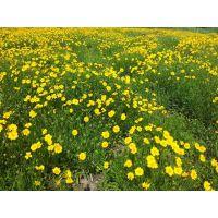 冬天冻不死的花有哪些多年生的花 茗茜花卉基地一手供应保证成活率