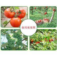 山东河南阳光玫瑰葡萄有机质含量高内蒙古纯羊粪产量高开