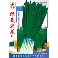 绿美韭菜F1