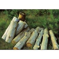 上海木材进口报关公司丨上海报关代理公司