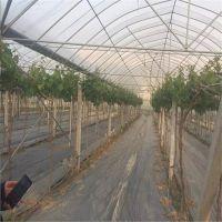 无锡直供 优质连体大棚 玻璃温室 阳光板温室 物美价廉 设计安装
