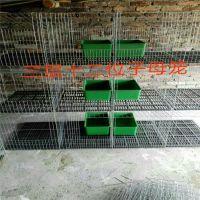 贵州兔子笼 贵州兔子笼价格 贵州子母兔笼批发市场