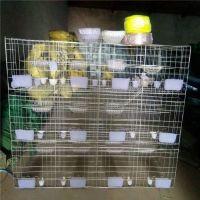 利港丝网批发耐用型广西12位鸽子笼12位肉鸽笼12位鸟笼子
