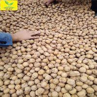 出售核桃种子 香玲品种 粒大饱满 现场看货起货 核桃种子多少钱一斤