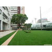 长沙草皮草毯价格怎么样,便宜的草坪草有哪些