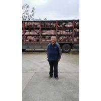 江西樟树客户张桂生喜购鄂美PIC二元母猪