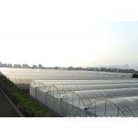 江苏镇江火龙果草莓采摘大棚温室3米圆拱型建造公司