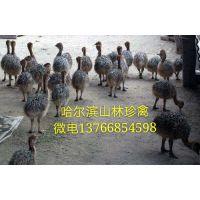 鹤岗鸵鸟养殖场佳木斯鸵鸟养殖场黑河鸵鸟养殖场