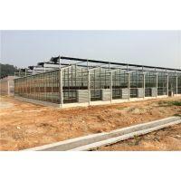 云南普洱镀锌钢架构玻璃温室大棚顶部8MMPC板覆盖、12米开跨项目造价