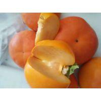 陕西柿子苗 山东柿子苗 陕西柿子苗 脆甜柿子苗 甜柿子苗木 优质柿子苗