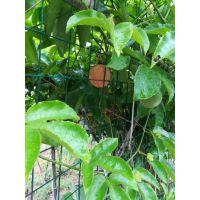 安徽火龙果种植基地铁围栏武汉第一厂家圈果园铁丝网围栏低价售