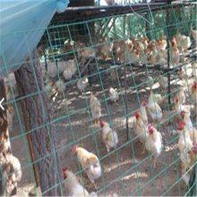 养鸡荷兰网 养鸡铁丝网 围墙铁丝网