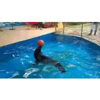 专业马戏团杂技海狮海豹企鹅全国预订中