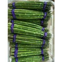 T4F1-芦笋种子,高产芦笋种子