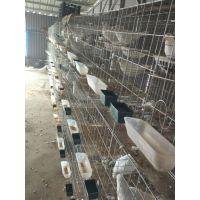 优质加粗16位鸽子笼 养殖鸽笼 种鸽鸽笼配对笼 肉鸽繁殖笼