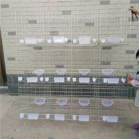 加粗12位鸽子笼价钱 12位/16位鸽子笼尺寸 鸽子笼厂家