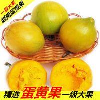 蛋黄果 5斤装精选大果8-10个装鸡蛋果越南新鲜采摘非海南狮头果