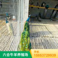 优质观赏孔雀幼崽 种孔雀价格行情走势 六合养殖批发