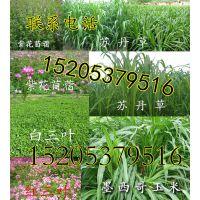 http://himg.china.cn/1/4_790_240430_720_800.jpg