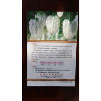 脆甜可口的台湾苹果苦瓜亩产8000斤