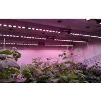 组培室|组织培养室|植物组织培养室建设