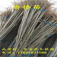http://himg.china.cn/1/4_795_236536_800_800.jpg