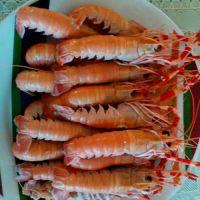 乳山海龙虾代理 鲜冻海鳌虾价格