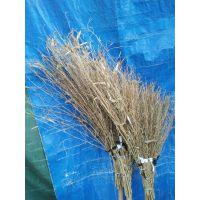 金竹牌大竹扫帚,柄长轻便高效,牢固赖用,超值无比,实惠无比。