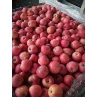 山东红富士苹果批发产地冷库苹果信息