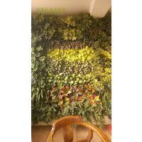 植物墙用于家里装修怎么样