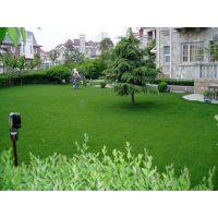 图吧╝诚S╚本溪草坪种植%服务%本溪草坪种植基地