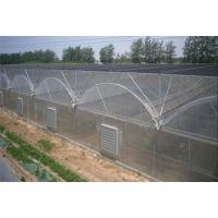 安徽大型生态育苗大棚育苗温室4万平方、连拱薄膜型工程报价
