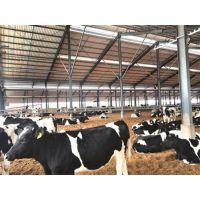 钢结构奶牛棚出口新西兰 三维钢构多年钢结构外贸经验