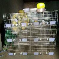 河北利港丝网批发加粗3层12位4层16位鸽子笼养殖肉鸽笼广式鸽笼