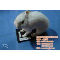 求精教学(已认证),漯河动物标本,动物标本挂件