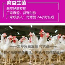 禽用益生菌养鸡调节肠道益生菌