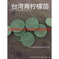 重庆无籽青柠檬苗多少钱一棵