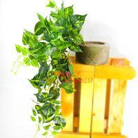 广州地铁上安装假植物藤条叫什么名字呢?