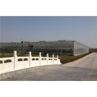 海南观光大棚观光玻璃温室6米高度、风机水帘自动控温型建造厂家