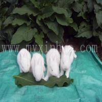 长毛兔养殖养殖效益分析/长毛兔养殖成本分析/长毛兔养殖成本与利润