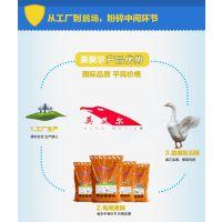 产蛋鹅用什么饲料能提高产蛋量,蛋鹅饲料,产蛋鹅专用饲料